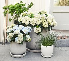 Hortensia kruka Small Courtyards, Balcony Garden, Container Gardening, Indoor Plants, Flower Power, Floral Wreath, Backyard, Wreaths, Landscape