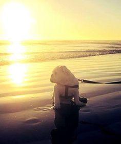 Sunset Bulldog