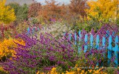 Entry at the Garden Plants, That Look, Gardens, Color, Design, Outdoor Gardens, Colour, Garden