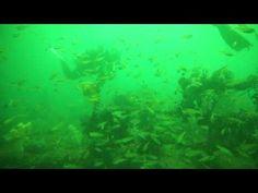沈船でサンゴと群れを楽しむ東京のダイビングスクールは足立区綾瀬近く