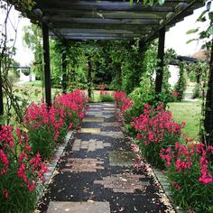 Our flower filled pergola is the aisle for our brides for our outdoor wedding ceremonies Pergola Kits, Wedding Ceremony, Gazebo, Backdrops, Sidewalk, Gallery, Outdoor Weddings, Flowers, House