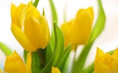 Yellow Flower Wallpaper Flowers Nature Wallpapers in jpg format Pictures Of Spring Flowers, Yellow Spring Flowers, Yellow Tulips, Spring Colors, Flowers Wallpaper, Spring Wallpaper, Desktop Images, Annual Flowers, Garden Soil