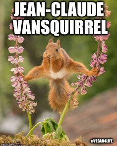Jean-Claude VanSquirrel  | JEAN-CLAUDE VANSQUIRREL #VEGAN4LIFE | image tagged in memes,funny,vegan4life,jean-claude vansquirrel,jean-claude van damme | made w/ Imgflip meme maker