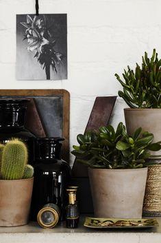 Pots / Plantes / Grasses / Cactus / Inspiration / Détails / Vase / House / Home / Sweet Indoor Garden, Indoor Plants, Potted Plants, Plant Pots, Best Office Plants, Low Light Plants, Pot Plante, Cactus Y Suculentas, Cacti And Succulents