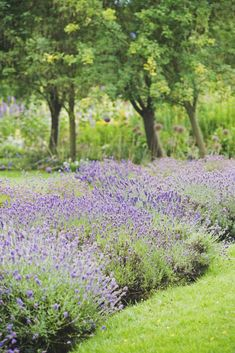 Lavendercountryliving