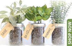 Mason Jar Herb Kits - No need for this kit. this is an EASY do it yourself idea! Need: Pint Mason Jars, Organic soil, rocks, label, twine and seeds! Mason Jar Herbs, Mason Jar Herb Garden, Pint Mason Jars, Organic Soil, Organic Gardening, Herb Gardening, Herbs Garden, Garden Weeds, Organic Seeds