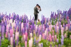 Field of violet lupin blooms // Boon and Sherilyn's Engagement in Untouched New Zealand