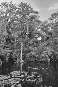 Ghost Swamp #richelsarfati #swamp