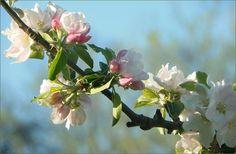 Blütenzweig - Jahreszeiten - Galerie - Community
