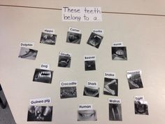 Matching teeth for our unit about healthy and different teeth