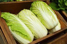 Существуют некоторые заблуждения, связанные с пекинской капустой. Во-первых, многие считают её исключительно салатной, пригодной только для свежего потребления. Однако это не совсем так.