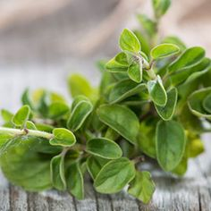 Oregano Oil Benefits Superior To Prescription Antibiotics