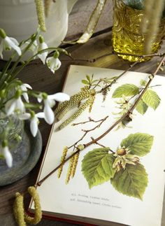 Springtime Nature Study ....