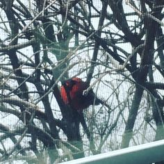I see you there Mr. Cardinal. I know who you are. I know you're with me.