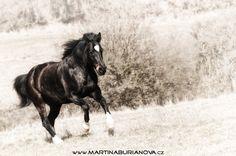 www.martinaburianova.cz Horses - Free in paddock