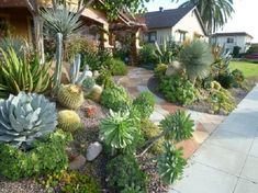 Succulent garden.                                                                       ~m.plantas.facilismio blogspot