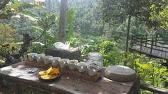 Coffee plantation, Ubud - Bali
