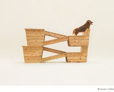House for Long Bodied, Short Legged dogs by Atelier Bow Wow.