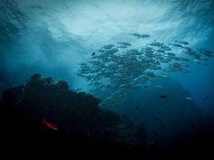 Los fondos marinos de la isla de Cocos, cerca de las costas de Costa Rica (Tracey Jennings, 2014)