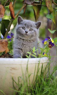 Garden friend <3
