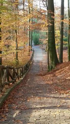 Herfst in sonsbeek park