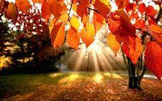 20-Pack 'Breezy Autumn' Premium Incense