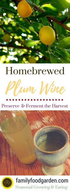 Preserve the taste of summer with home brewed plum wine! We made plum wine a couple of years ago using yellow plums, and this year as we have a very large Italian plum tree we'll be doing the same this summer. I imagine the taste and color will turn out quite different. If you use...