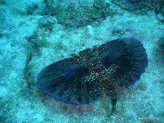 Animals: Sea Animals | Wild Life