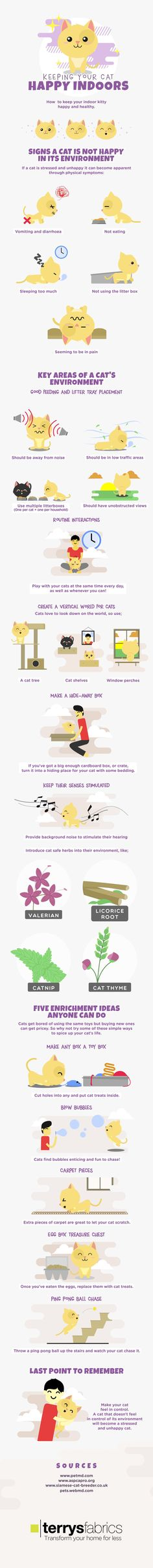 Many cats love to stay indoors and are never happier than when padding around the house. Yet sometimes your cat may become less content, which can be distressing both for you and your pet. The following infographic from Terrys Fabrics looks at how to keep your cat happy indoors.
