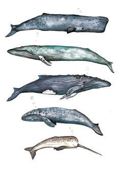 Wal-Sammlung Aquarell Illustration Home von MichaelJIllustration