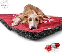 Dog Beds, Cushions and Blankets Archives - Muddy Mutts and Pocket Pups Dog Christmas Presents, Unique Dog Beds, Dog Blankets, Designer Dog Beds, Pocket Pet, Dog Design, Your Pet, Sofas, Collars