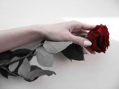 beautiful, girl, hand, pale, rose