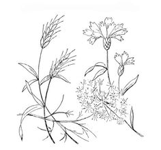 Embroidery Pattern: