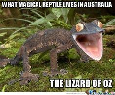Lizard of Oz...