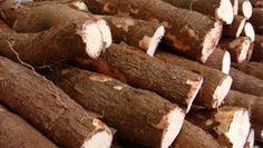 La yuca es un tubérculo mayormente conocido en países con un clima tropical. Su rico sabor y textura la hacen el plato favorito de muchos. Este tubérculo es rico en fibras, calorías, hidratos, proteínas, carbono, sodio, azucares y fibra dietética.Además, nos aporta mucha energía y muchos más beneficios. En este ...