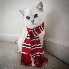 Coby, o gatinho que parece usar delineador, conquista milhares de fãs na internet | Gatices