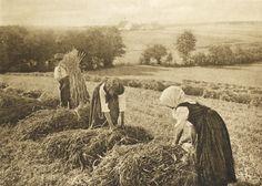 Heinrich Wilhelm Müller: 'Harvest', 1909  How I wish it were 1909 ...
