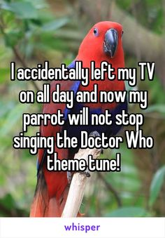 I accidentally left my TV on all day and now my parrot will not stop singing the Doctor Who theme tune!