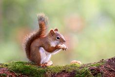 animal symbolism meaning of squirrel