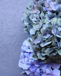 • Ditto Ditto favourites • These hydrangeas are the only blues we can handle on this Tuesday that feels like a Monday.
