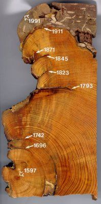 Dendrochronology.....dating trees by the rings..awesome