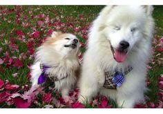 Cachorro cego fica melhor amigo de seu pequeno cão-guia