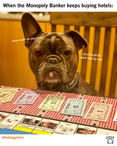 Never trust the banker 👀 (🎬@thebuggablue) Never Trust, Funny Dog Pictures, Funny Dogs, French Bulldog, Make It Yourself, Photo And Video, Animals, Instagram, Funny Dog Photos