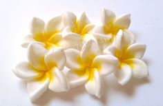 Hey, I found this really awesome Etsy listing at https://www.etsy.com/listing/387404512/plumeria-frangipani-tropical-aloha