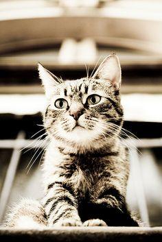#cat . . . stevens  Like,Repin,Share, Thanks!