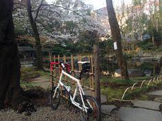 Copyright © ヒデ 様 / 2013 DASH X20 / 東京も3/25に開花宣言されたので、朝練がてら偵察に行ってみました。皇居をぐるっと回りながら、外堀公園〜靖国神社〜千鳥ヶ淵緑道〜アークヒルズ走って来ました。外堀公園は全く咲いていませんでしたが、他は一分から三分咲きって感じでした。週末から来週が見頃でしょうね〜