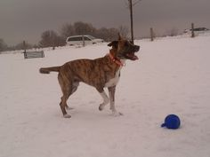 Boomer playing in the snow