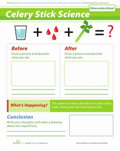 Learn more about how plants work with this cool celery experiment! Use this worksheet to help you record your observations after doing this experiment.