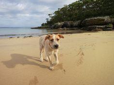 Cachorro na praia: devo ou não levar?