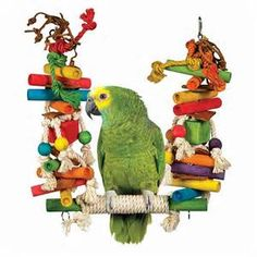 parrot swings - - Yahoo Image Search Results